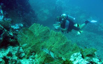 タイの海でダイビング調査中の環境保護ボランティア